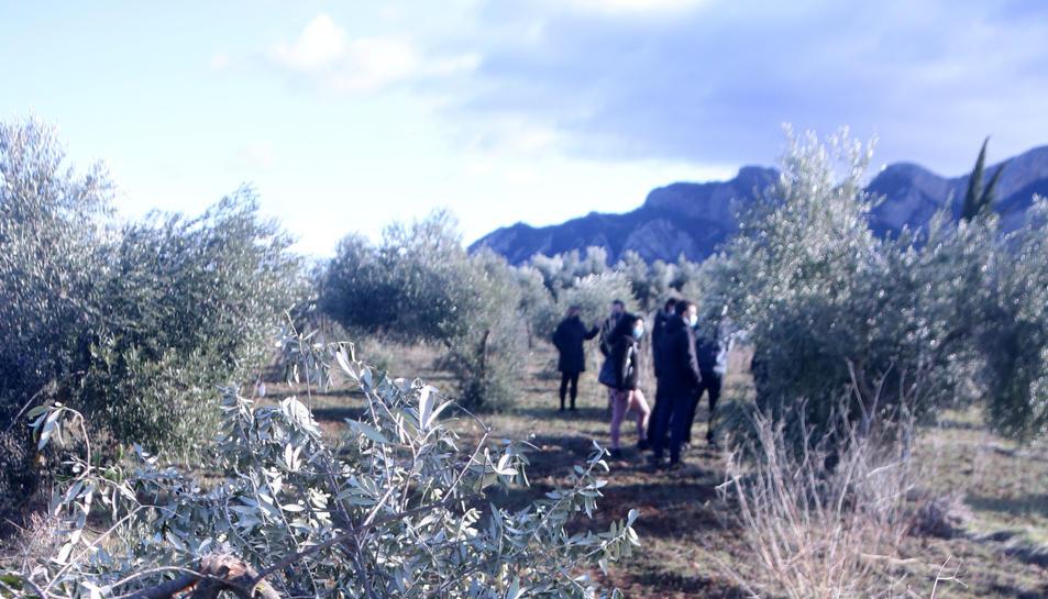 Primer pla d'una olivera trencada pel pes de la neu en una finca d'Horta de Sant Joan, a la Terra Alta.
