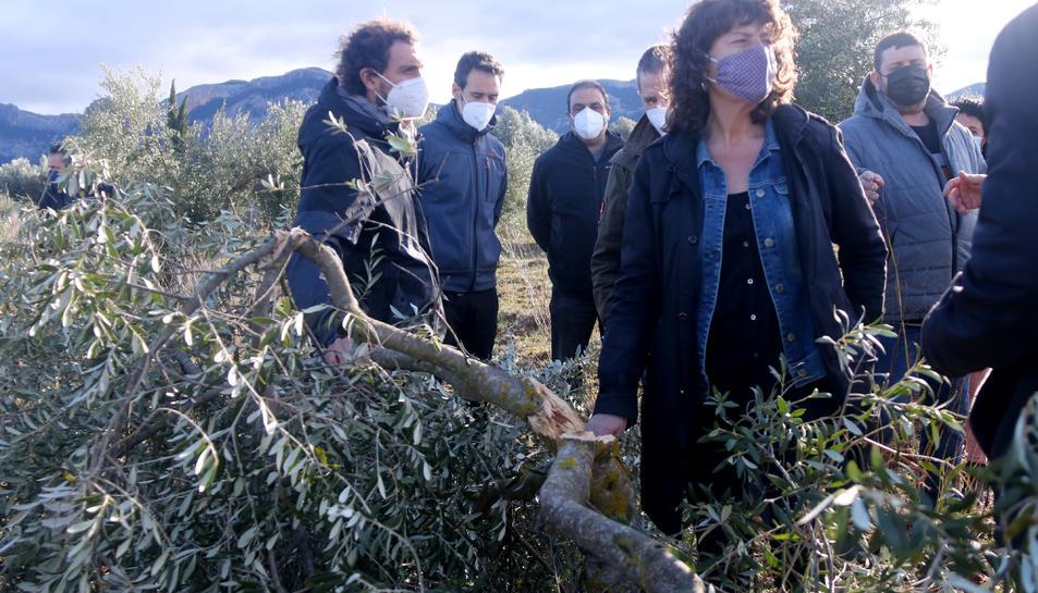 Pla mitjà de la consellera d'Agricultura, Teresa Jordà, al costat d'una olivera jove trencada pel pes de la neu.