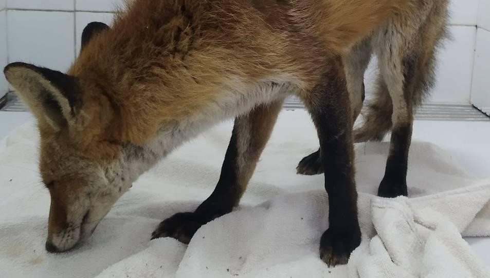 Imatge de l'animal trobat.