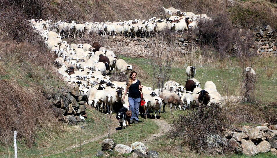 La pastora Anna Plana amb el seu ramat d'ovelles a la Vall d'Àssua, al Pallars Sobirà.
