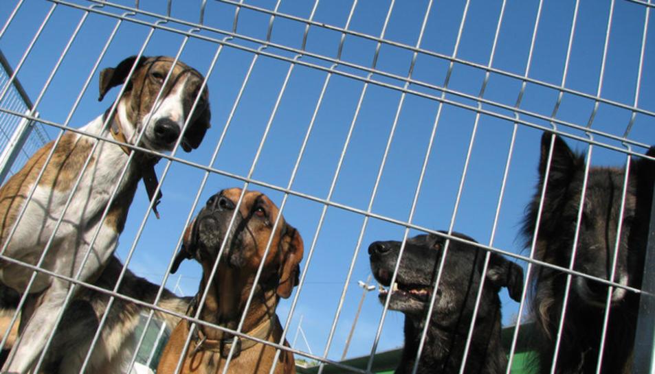 Gossos abandonats, en un centre d'acollida.