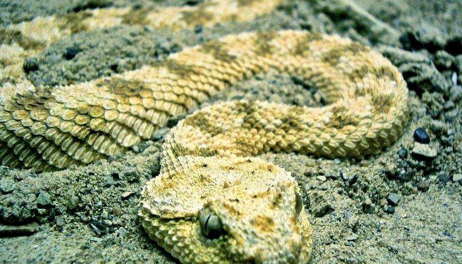 Una serp.