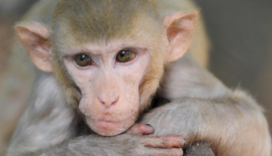 Un mico.