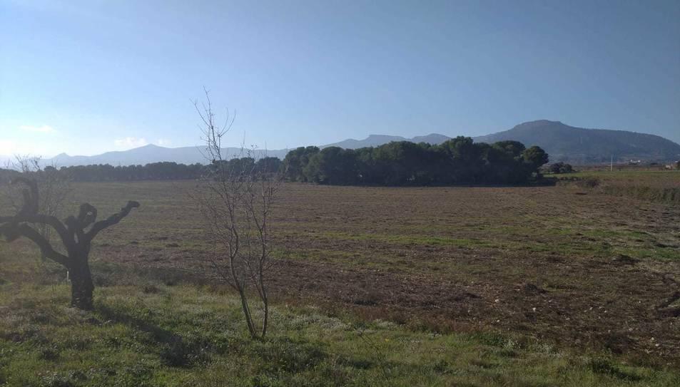 Terrenys on s'hi projectarien plaques solars, al terme del Pla de Santa Ma