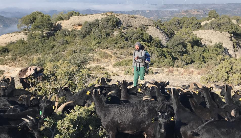 El pastor Daniel Giralto amb el seu ramat al Montsant l'any passat.