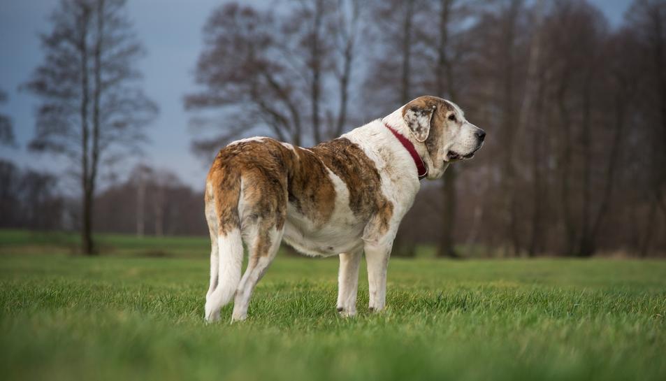 Imatge d'un gos.