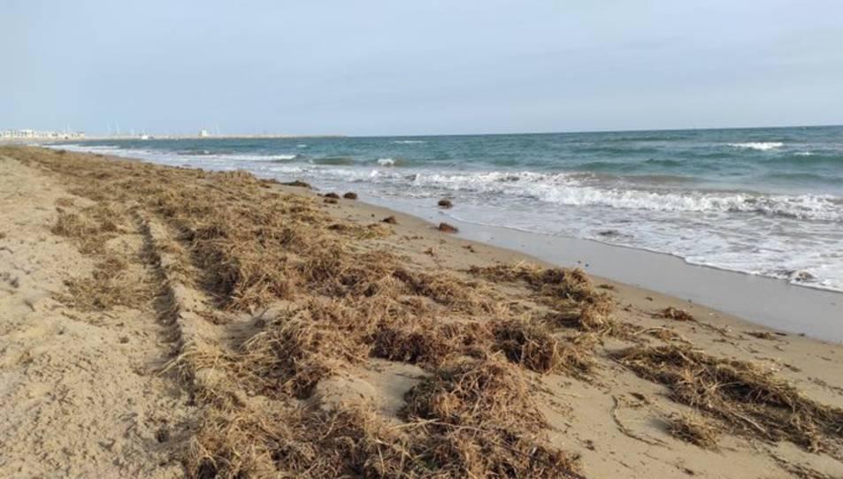 La sorra acumulada junt al mur del passeig marítim és traslladada als indrets més erosionats.