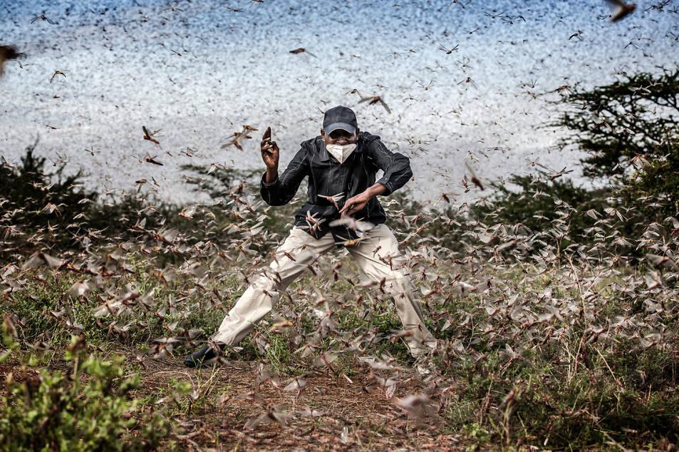 La imatge de Luis Tato d'una plaga de llagostes al desert de Kènia, que opta a millor fotografia de l'any del World Press Photo 2021.