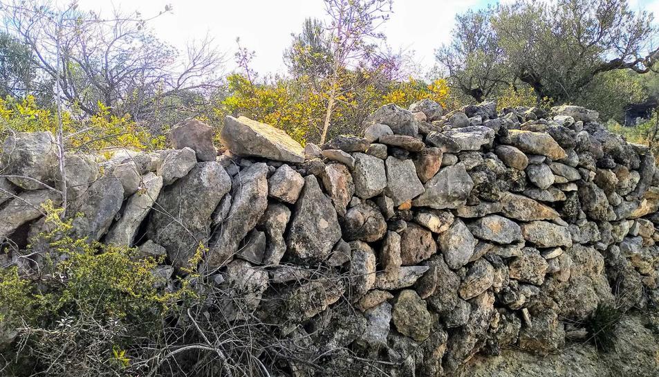 Imatge d'un marge amb pedra seca a l'Anella Verda.