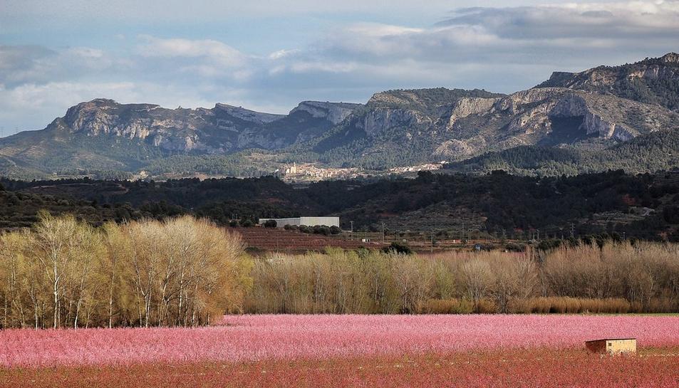 A la Ribera d'Ebre es pot contemplar la floració de l'ametller, el presseguer i el cirerer.