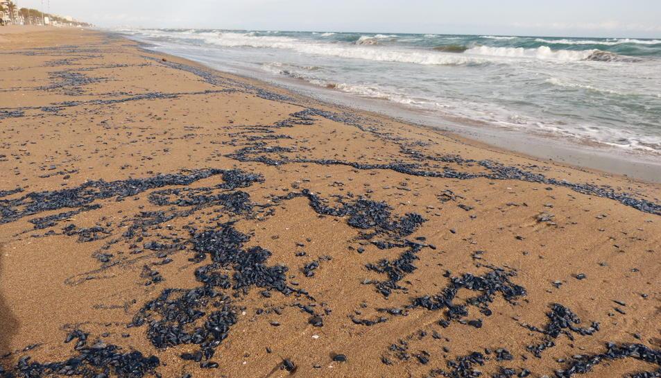Imatge de la platja de Calafell plena de meduses.
