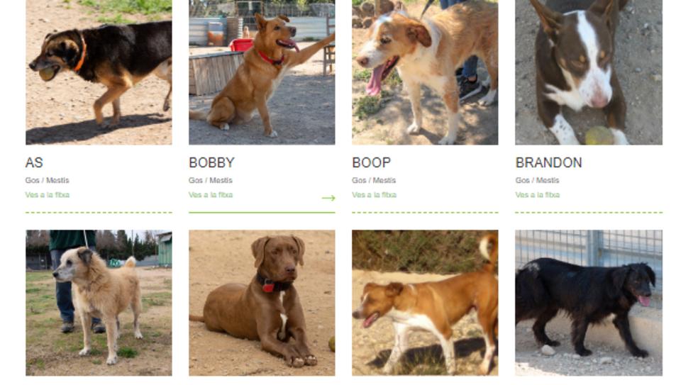Imatge web Benestar Animal.