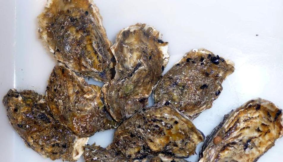 Primer pla d'uns quants exemplars d'ostra.