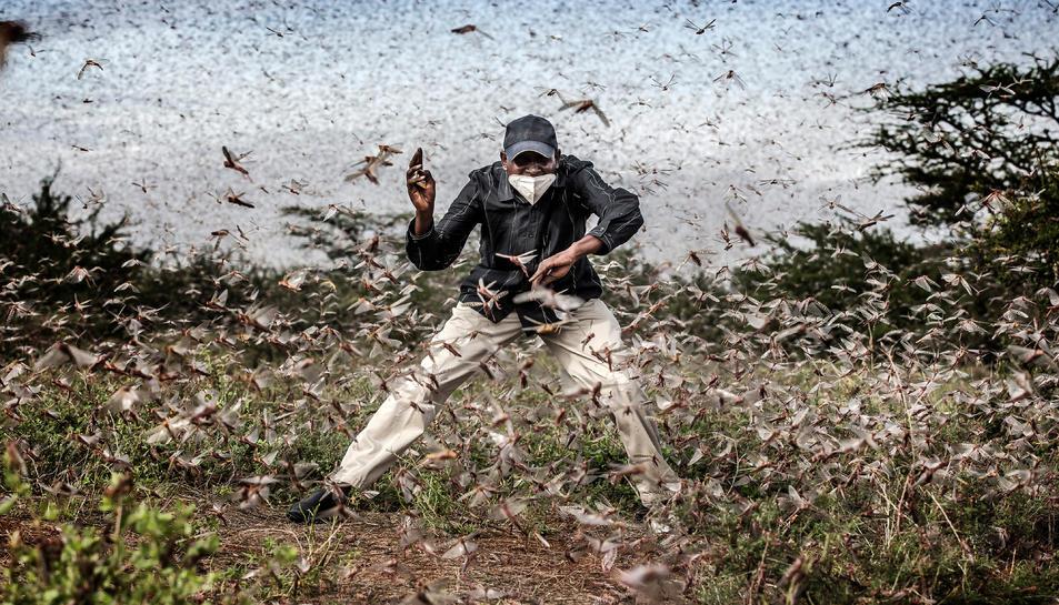 La imatge de Luis Tato d'una plaga de llagostes al desert de Kènia.
