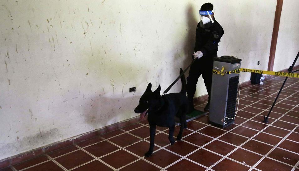 Un gos entrenat amb el mètode Arcón, realitzant un exercici de demostració de detecció de la covid-19.