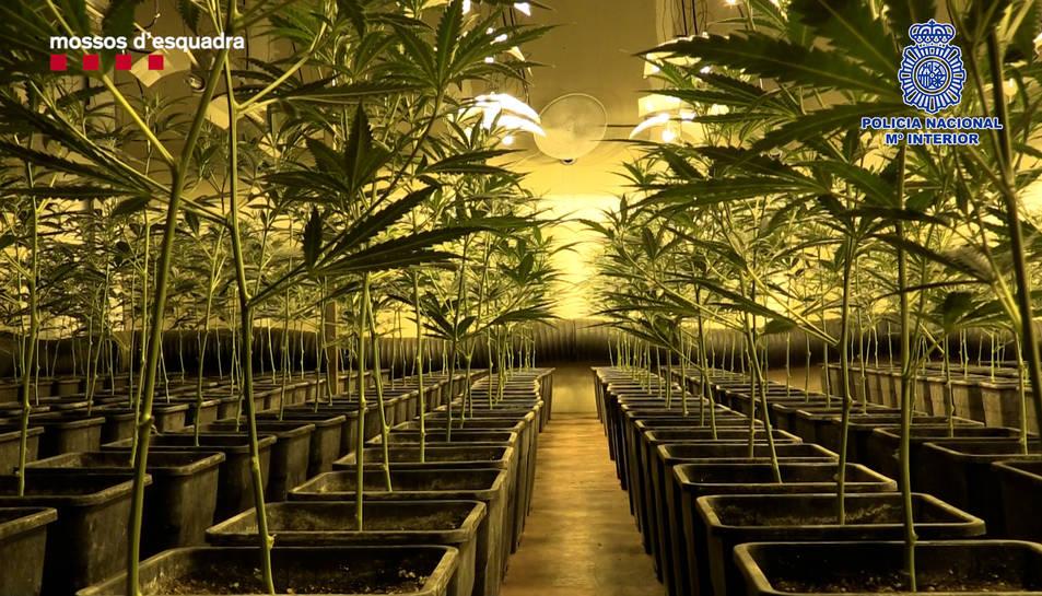 Les plantacions disposaven de sofisticats sistemes de cultiu.