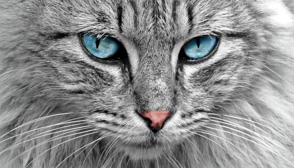 Un gat.