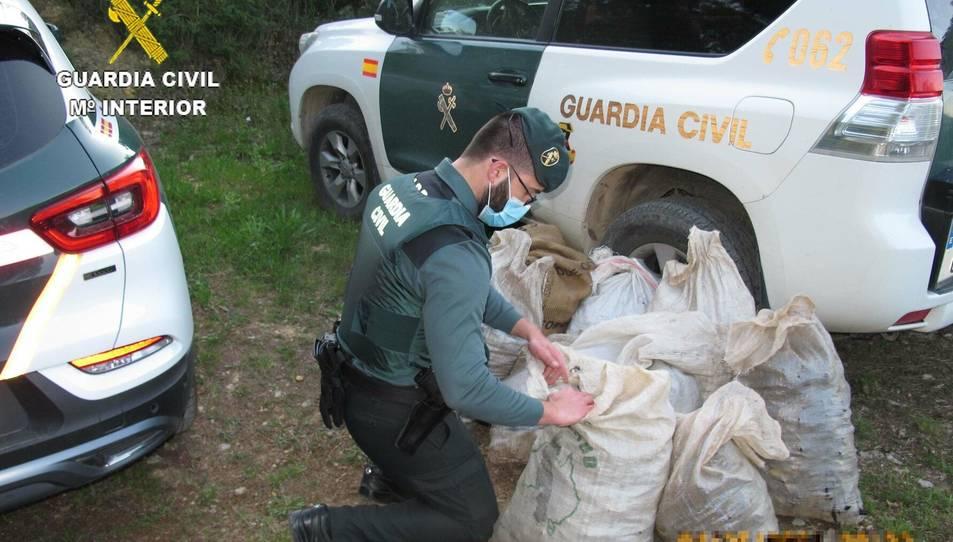 Els individus no disposaven de cap permís ni autorització del propietari de la finca per recollir les garrofes.