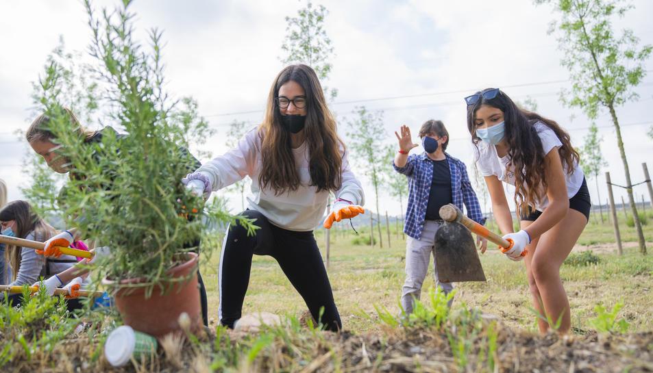 Els alumnes de l'INS El Morell fent la plantació ahir al matí.