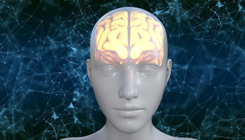 Els estudis milloren la capacitat del cervell, però no impedeixen el seu envelliment.