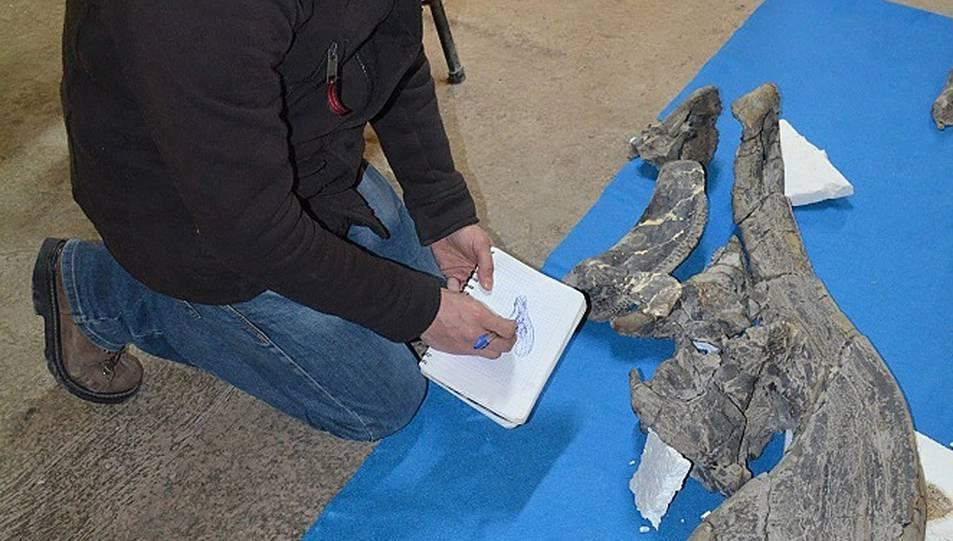 Imatge del crani trobat.