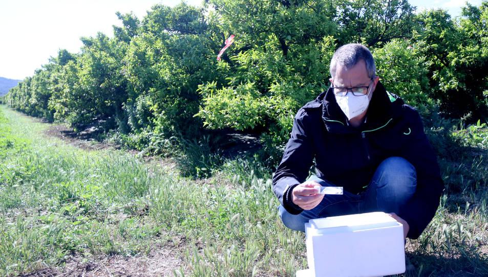 El director territorial d'Agricultura, Jesús Gómez, amb una caixa amb insectes.