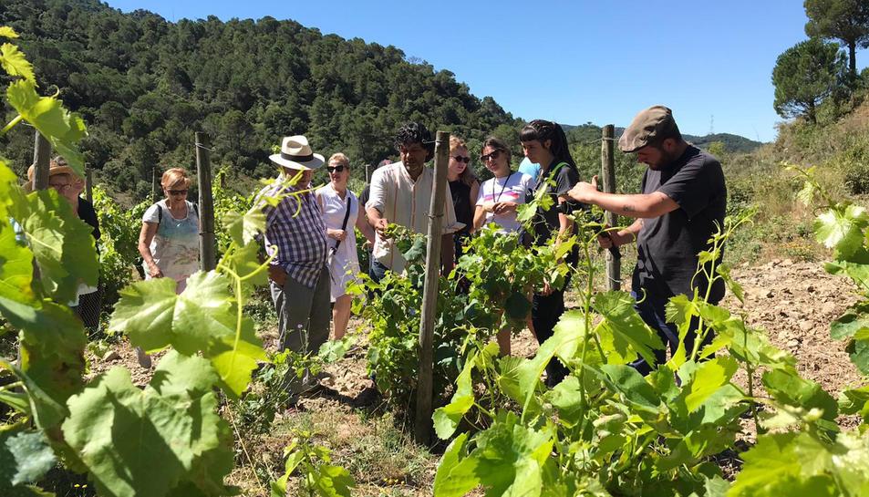 Una activitat d'enoturisme en unes vinyes de la DO Tarragona.