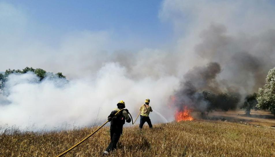 Efectius dels Bombers de la Generalitat treballant en l'extinció de l'incendi agrícola de la Pobla de Massaluca.