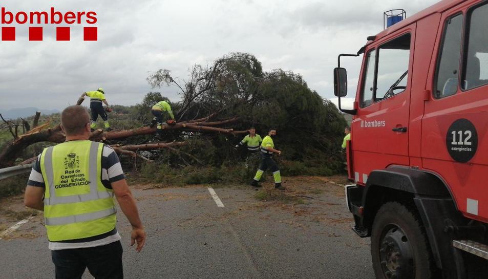 Imatge de l'arbre caigut que ha obligat a tallar la carretera.