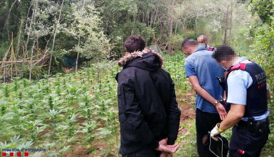 A Vila-rodona, els Mossos van detenir dos homes, responsables de la plantació de marihuana.