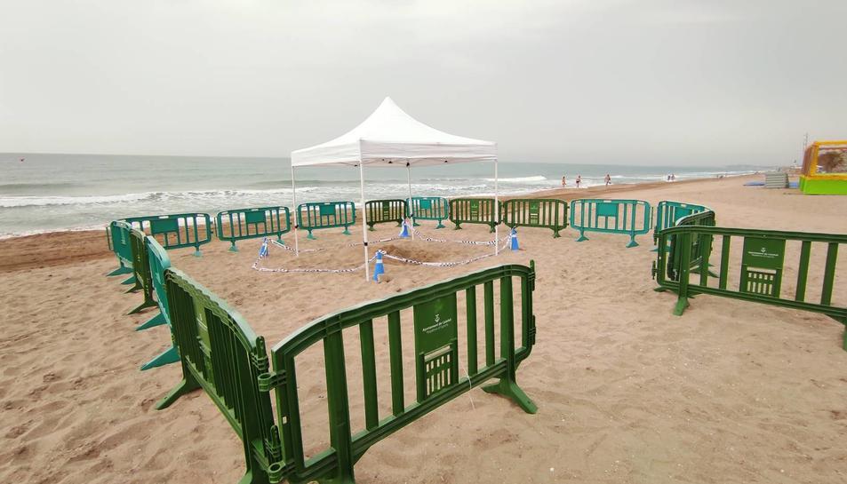 Localitzen a una tortuga babaua a la platja l'Estany-Mas Mel de Calafell