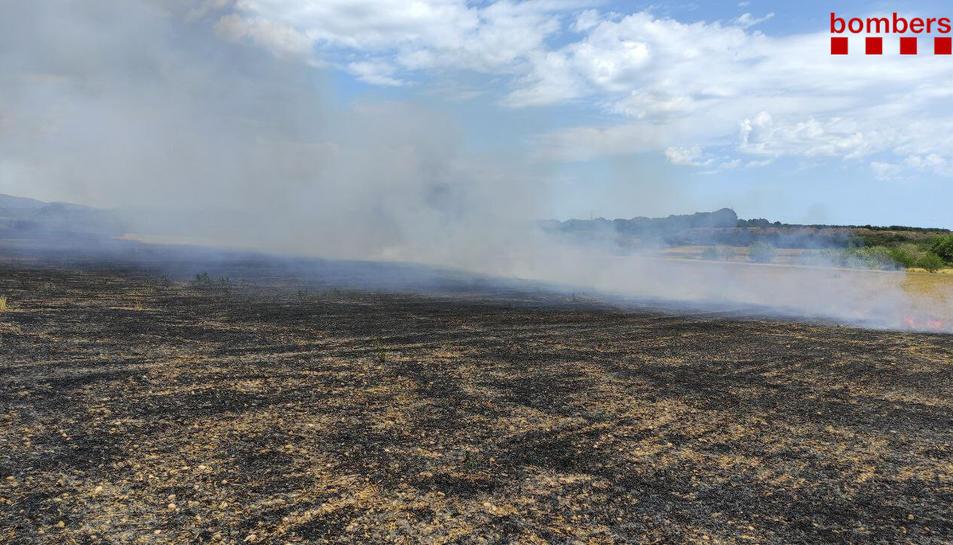 Extingeixen un incendi de 5,5 hectàrees en un camp de cereal a Alió