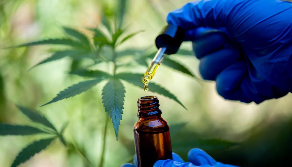 Imatge d'un investigador analitzant cànnabis per a usos terapèutics.