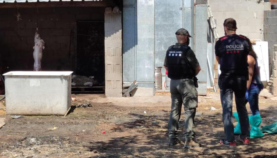 Un agent rural, un mosso i una tècnica durant la inspecció a Vilaverd (Conca de Barberà) de l'escorxador il·legal.
