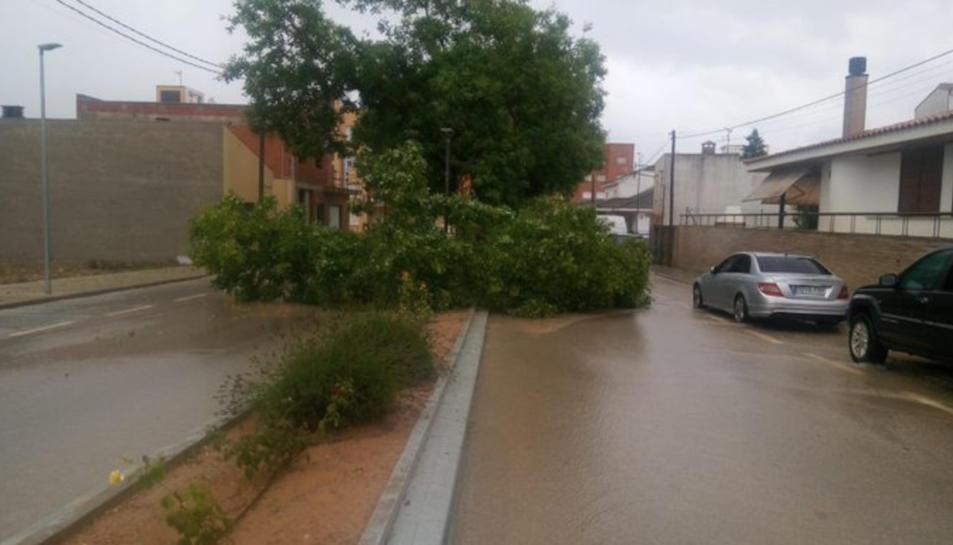 Pla obert de l'avinguda Constitució D'Ulldecona tallada per un arbre caigut a la calçada.