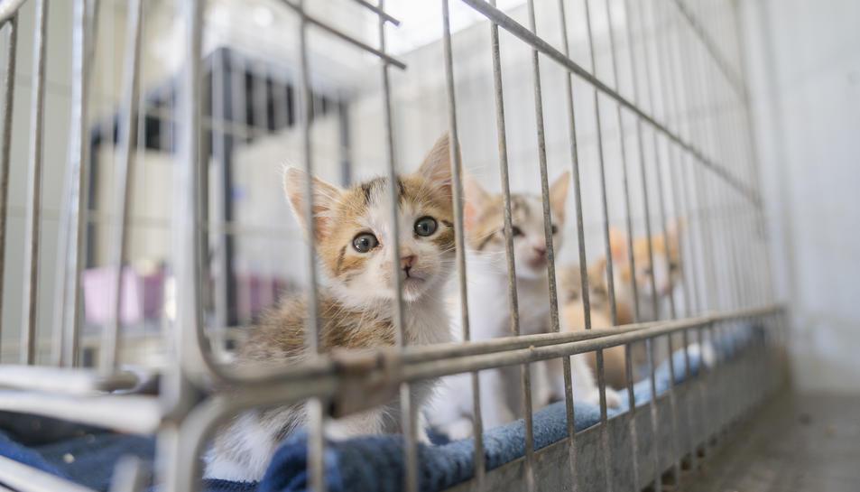 Uns 150 gats ja han trobat família durant el 2021, la majoria d'ells cadells de dos a quatre mesos.