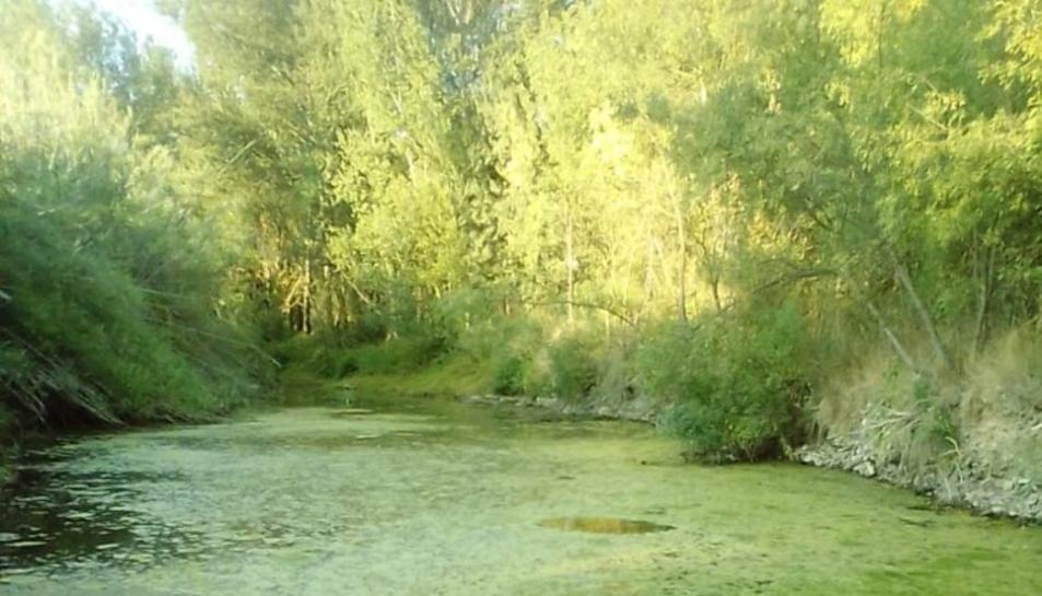 Zona del riu Siurana al seu pas per Poboleda.