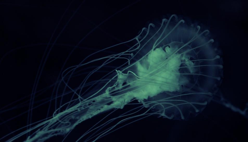 Imatge del microbi.