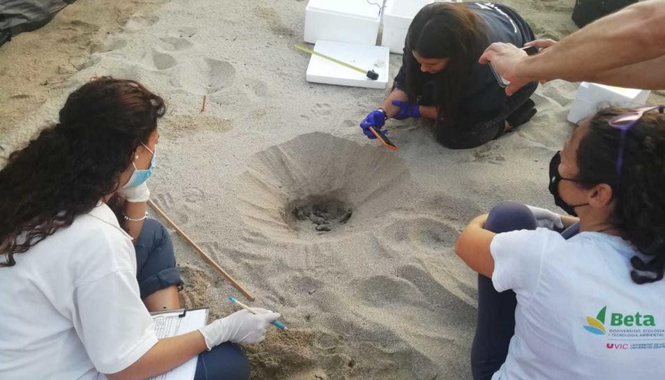 L'equip de voluntariat treballant en l'alliberament de les tortugues.