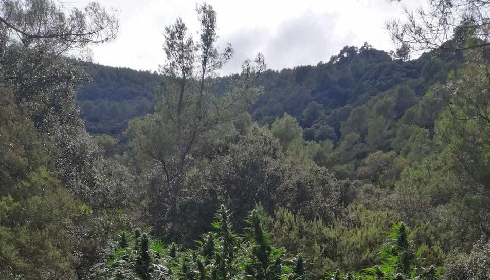 Imatge de les plantes.