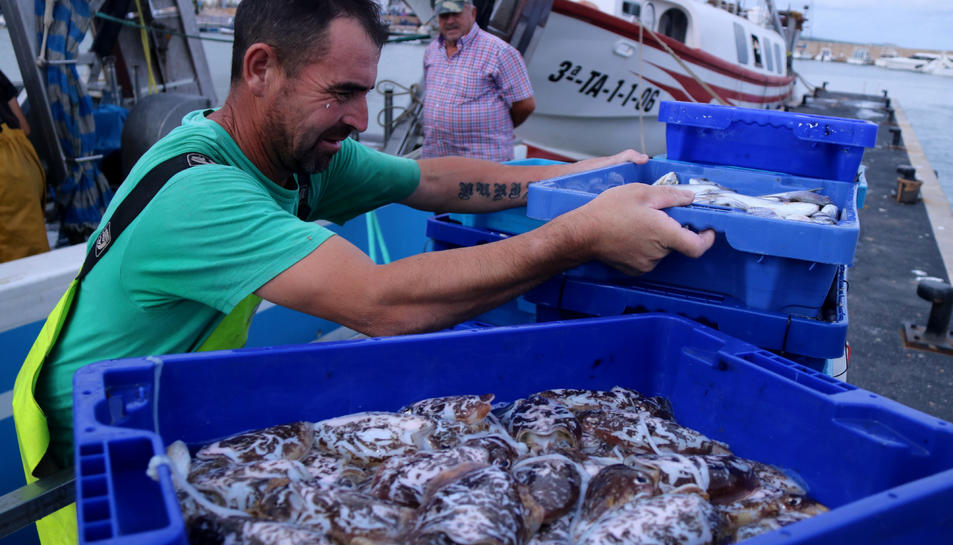 Pla mitjà d'un pescador descarregant les captures al port de les Cases d'Alcanar.