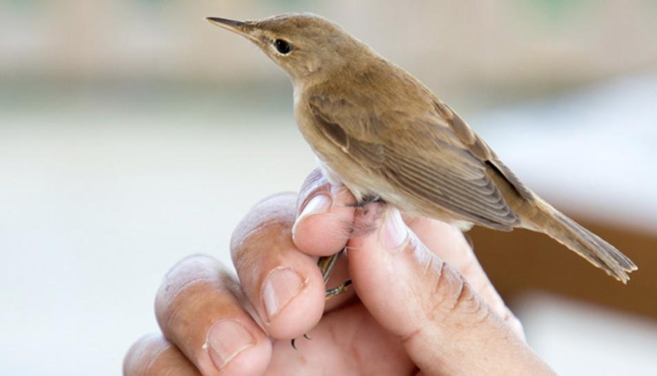 Observació ornitològica al Delta Birding.
