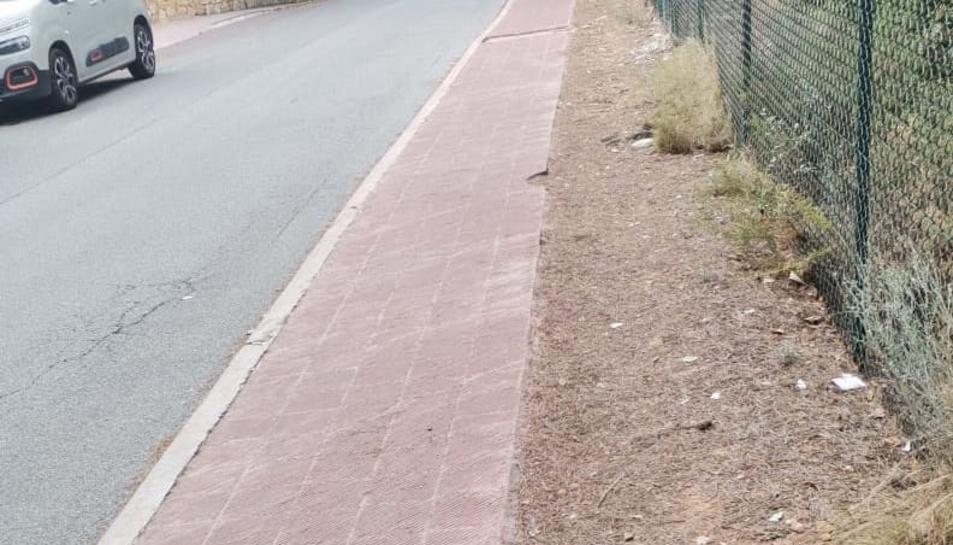 Imatge d'un esquirol atropellat al carrer Foixarda de la urbanització.