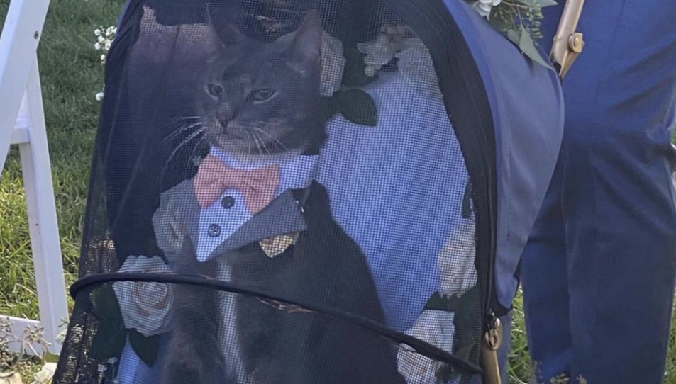 El gat, elegant durant la boda.