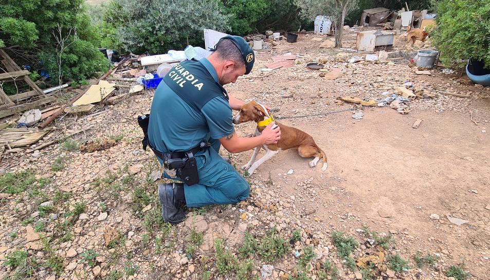 Imatge d'un dels gossos localitzats.