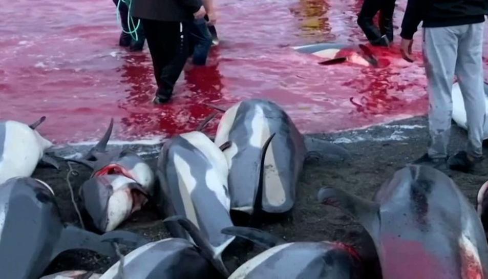 Imatge de la matança dels dofins.