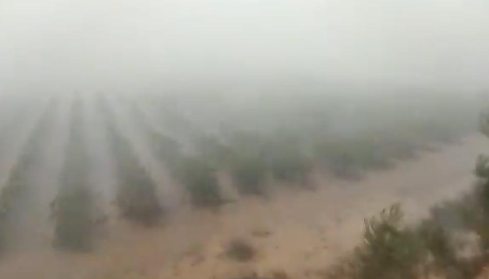 Captura del vídeo de la tempesta, que afecta a una zona de vinyes.
