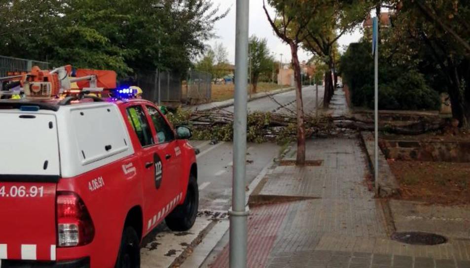 Un arbre caigut per la tempesta a Sant Cugat del Vallès.