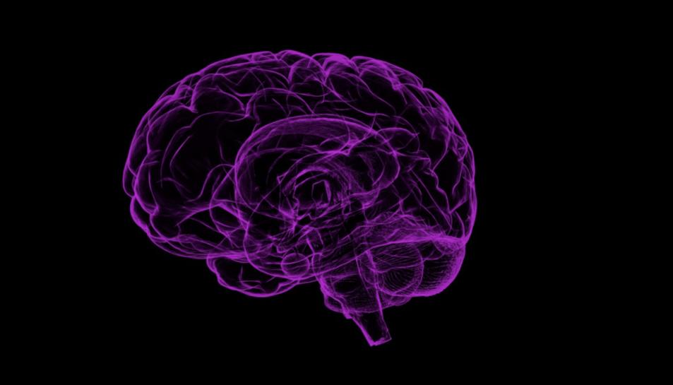 Un cervell.