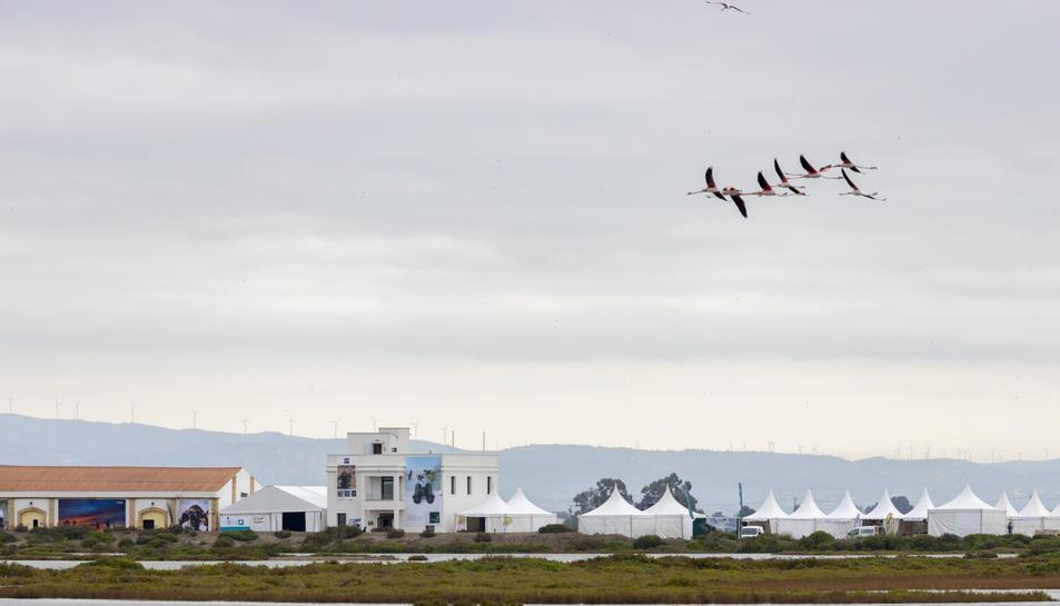 El delta de l'Ebre s'ha tornat el centre del món ornitològic amb el retorn del Birding Festival
